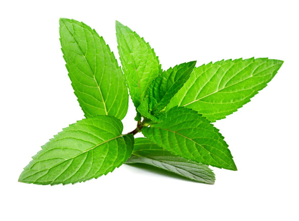 Peppermint Oil | Confessions of a CosmetologistConfessions ...