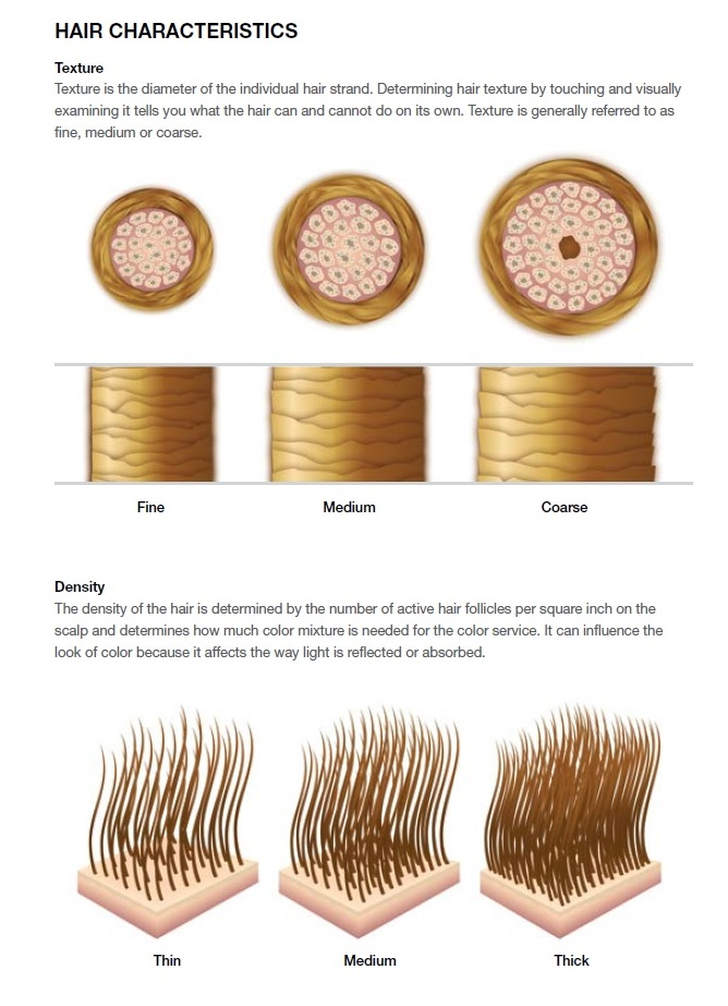 The Gallery For Gt Hair Texture Fine Medium Coarse