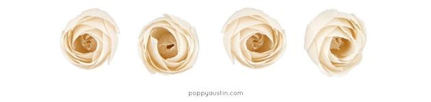 Poppy-Austin